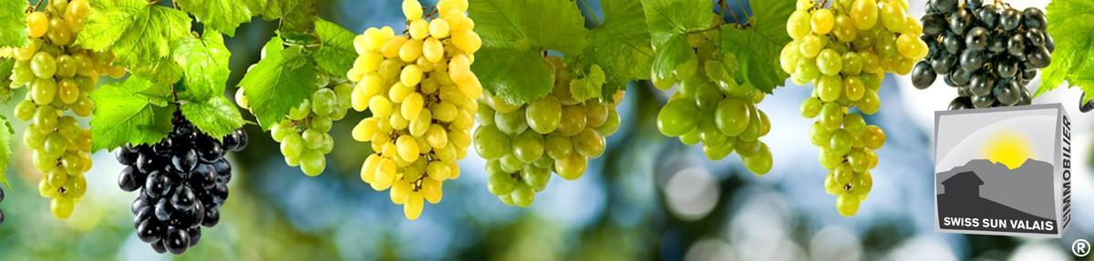 1.Swiss Sun Valais ® Vous achetez une belle vigne  en Valais Suisse. 1er réseau immobilier du Valais ®